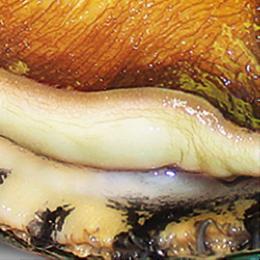 cmg jade tiger abalone natural white flesh