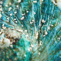 cmg jade tiger abalone shell