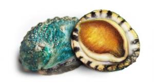 cmg jade tiger abalone sweet